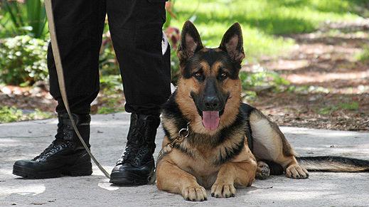 emploi agent de gardiennage maitre chien